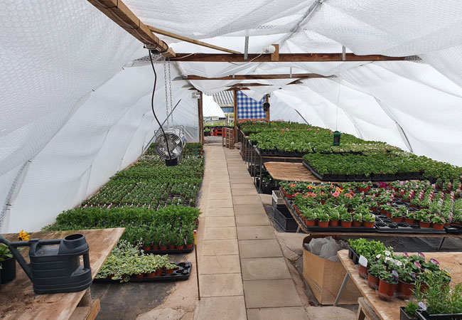 Farletonview-Horticultural-Polytunnel